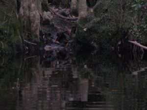 Babbling_tributary